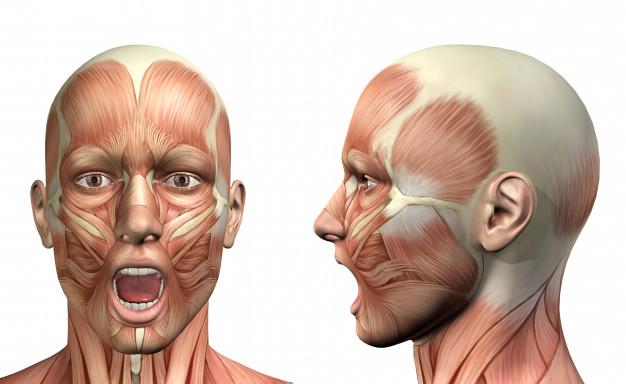 Musculatura do rosto