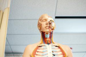 O Que É Fascia E Qual Sua Função Dentro Do Nosso Organismo