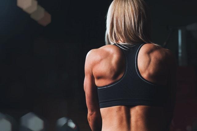 Qual é a importância dos principais músculos do corpo humano