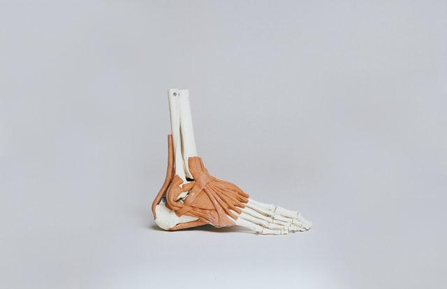 Principais músculos do corpo humano e suas funções