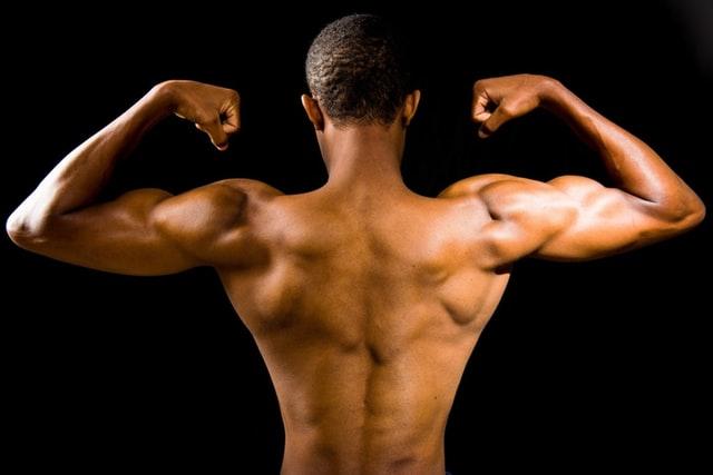 Quais são os principais músculos esqueléticos no corpo humano