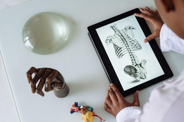 Classificação dos ossos do sistema esquelético